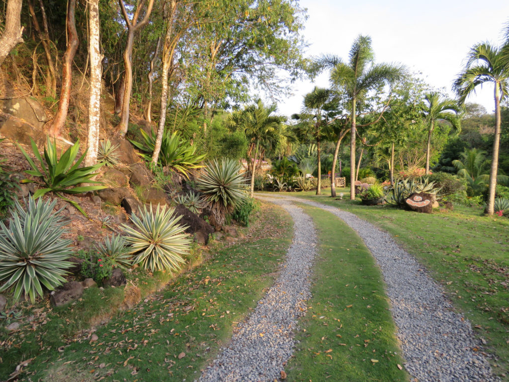 L'arrivée à La Koumbala et son jardin tropical